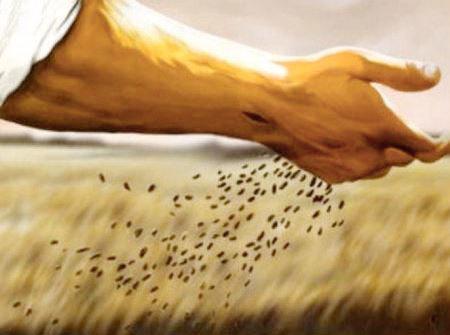 Gorčično seme